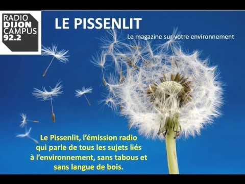 dijon-ecolo se dévoile sur radio Dijon Campus