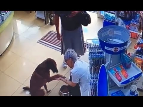 Умный пёс пришёл в аптеку попросить о помощи. Вот что случилось дальше