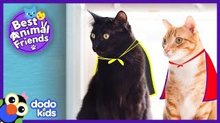 Cole And Marmalade Are Secret Supercats | Animal Videos For Kids | Dodo Kids