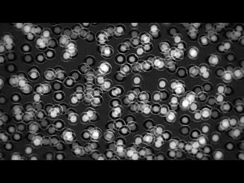 Unseen Ideas: Making the invisible visible - Cryo-electron microscopy