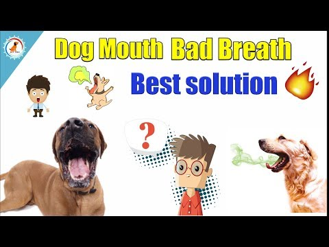 Dog Mouth Bad Breath / IN HINDI / How To Remove Bad Smell From My Dog?