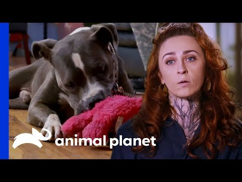 Rescuing Abandoned Dog From An Empty House | Pit Bulls & Parolees