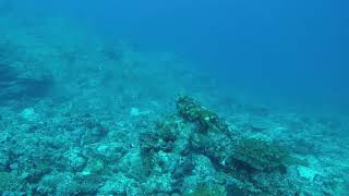 Fiji May 25, 2017 Namalata Reef SVS Port Transect 1 35 meters