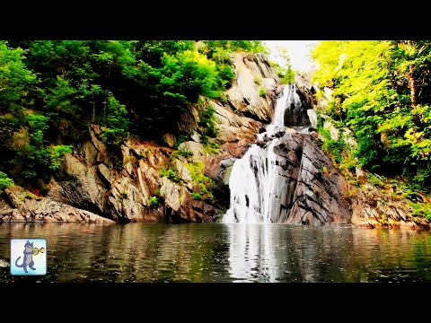 ✧ Relaxing Waterfall・Planet Earth Amazing Nature Scenery・3 HOURS・Best Relax Music�p HD ✧