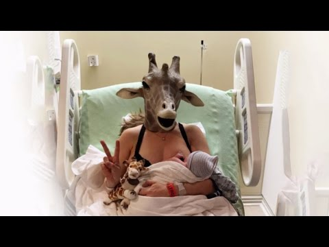 Thumbnail: Giraffe Mom Almost Forgot Mask On Way To Deliver Baby Boy