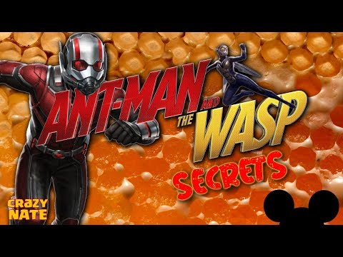 Ant-Man and the Wasp Everything You Missed