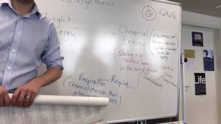 #ibbio IBDP Biology Topic 2.9 pt 1 Photosynthesis and its limiting factors | Will Vincent