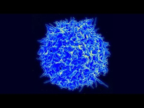 Cancer treatment breakthrough with immune cells, explained