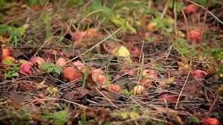 DenDärTim - Fallfrukt