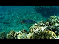 #DIVING Israel, Eilat: Snorkeling on the free corals in Eilat