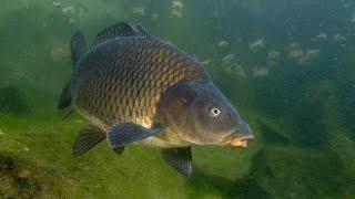 Рыбак рыбаку 237