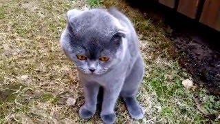 Кот не хочет домой
