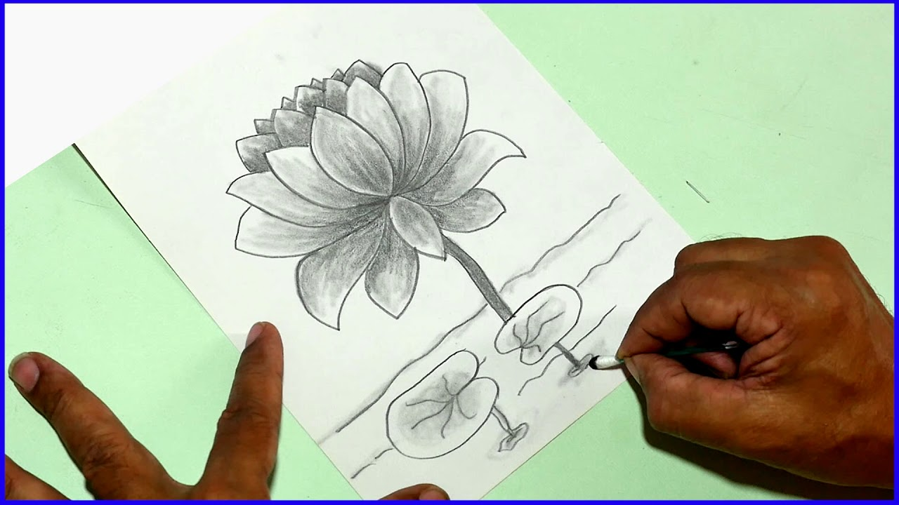 How to draw a water lotus flower daily art 10 easy for kids step by how to draw a water lotus flower daily art 10 easy for kids step by step colouring shading izmirmasajfo