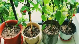 테라스텃밭(베란다텃밭) terrace gardening