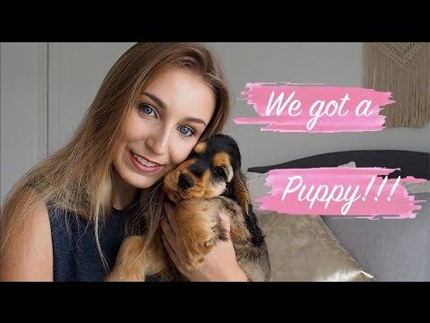 WE GOT A PUPPY!!!