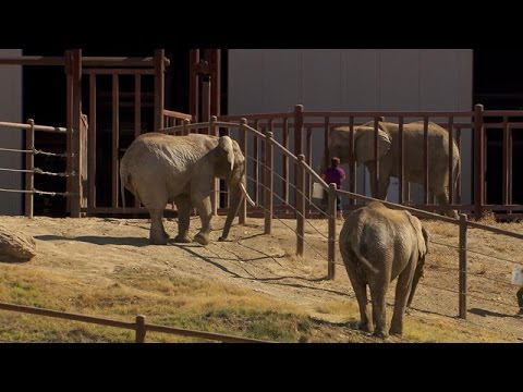 Elephants on Board : A Journey to Remember - the fifth estate