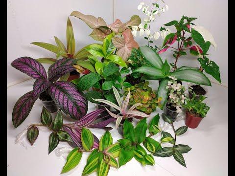 Растения едут в новый дом #5