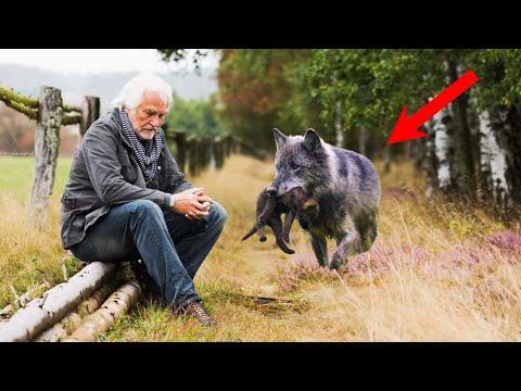 Волчица, отдавая своего волчонка этому мужчине, чувствовала, что их судьбы связаны