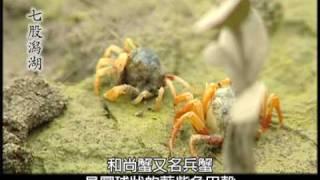 台灣最大且最完整的濕地~台南「七股潟湖」