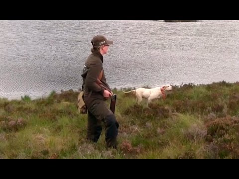 The Shooting Show – grouse over pointers special