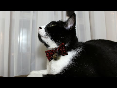 DIY Holiday Bow Tie For Pets Tutorial | The Sweetest Journey