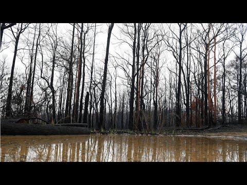En Australie, des orages éteignent les feux à l'est… et provoquent des inondations