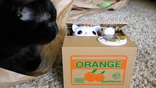 にゃんですと~!アメリカの猫も驚く日本の猫貯金箱