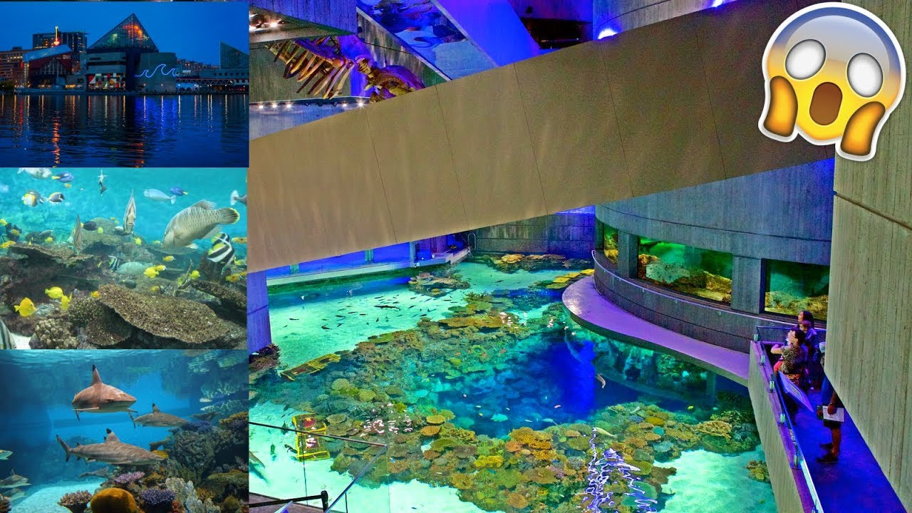 Best Aquarium In The United States Baltimore National