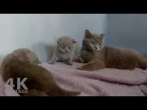 Cute Kittens Play and Cuddle with Mom, 26 Days