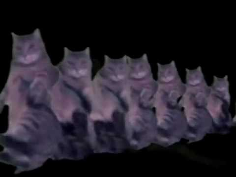 'Happy Birthday to You' feat. Funny Dancing Cats