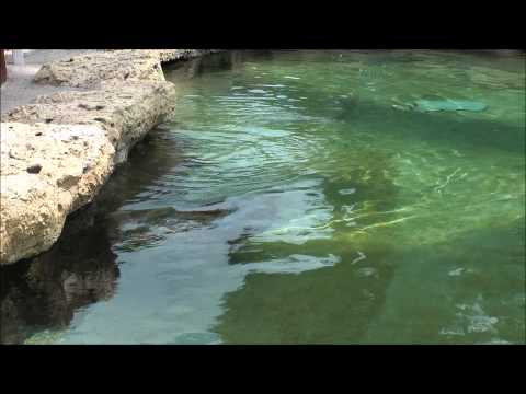 Turtle Point, SeaWorld Orlando HD (1080p)