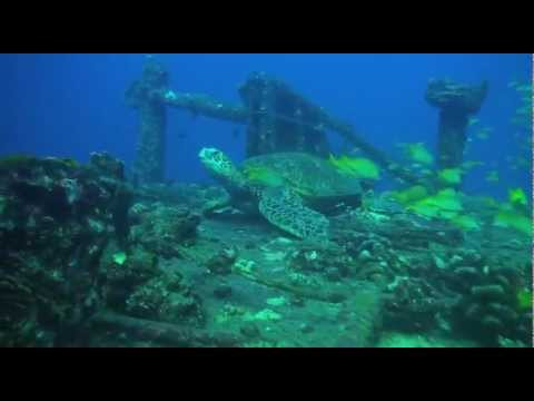 DIVING HAWAII - Best dive sites of Oahu by Hawaii Eco Divers