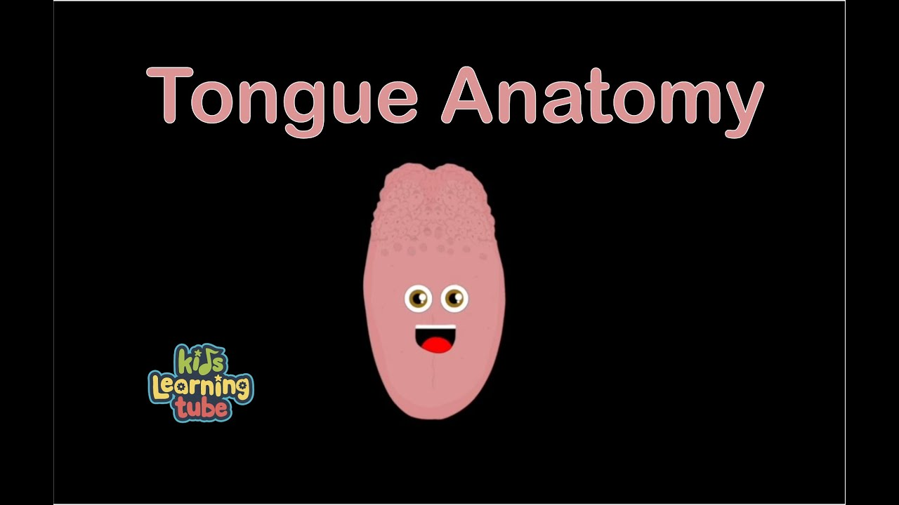 Tongue Song for Kids/Anatomy of Tongue/Tongue Song/The Tongue - YouTube