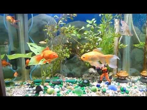 aquarium---before-and-after-using-uv-clarifier