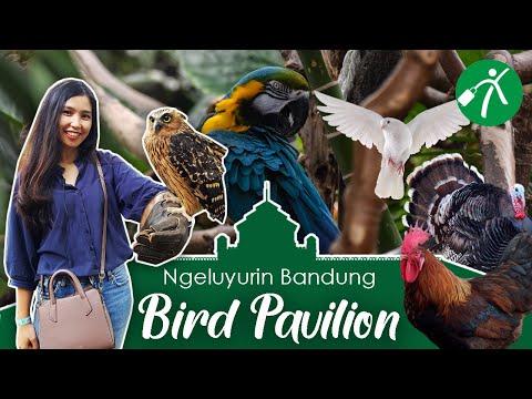Keluyuran ke Rumah Para Burung di Bird Pavilion Bandung