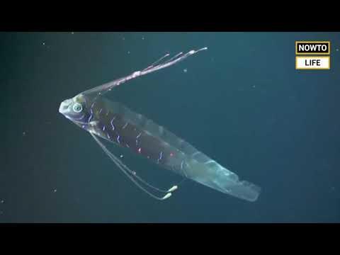 Fish That Alerts Before Earthquake