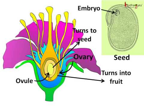 Science - Plants- Sexual Reproduction - Pollination, fertilization - English