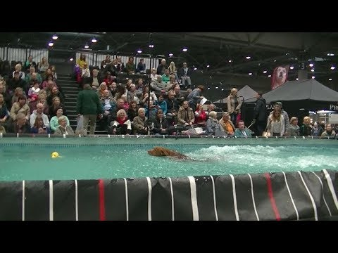 Water Ball in World dog show 2017