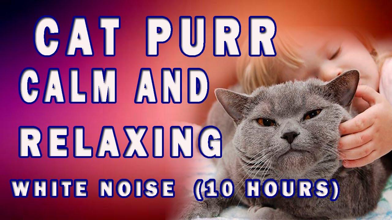 White Noise Cat Purr