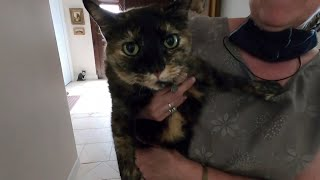 This Cat Got COVID-19 From Its Owner | Coronavirus News for May 29, 2020