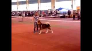 Выставка собак в Донецке  Гордость Донбасса