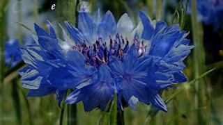 Удивительный язык цветов!
