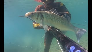 Spearfishing Greece ~ SEA BASS #Xmas edition#
