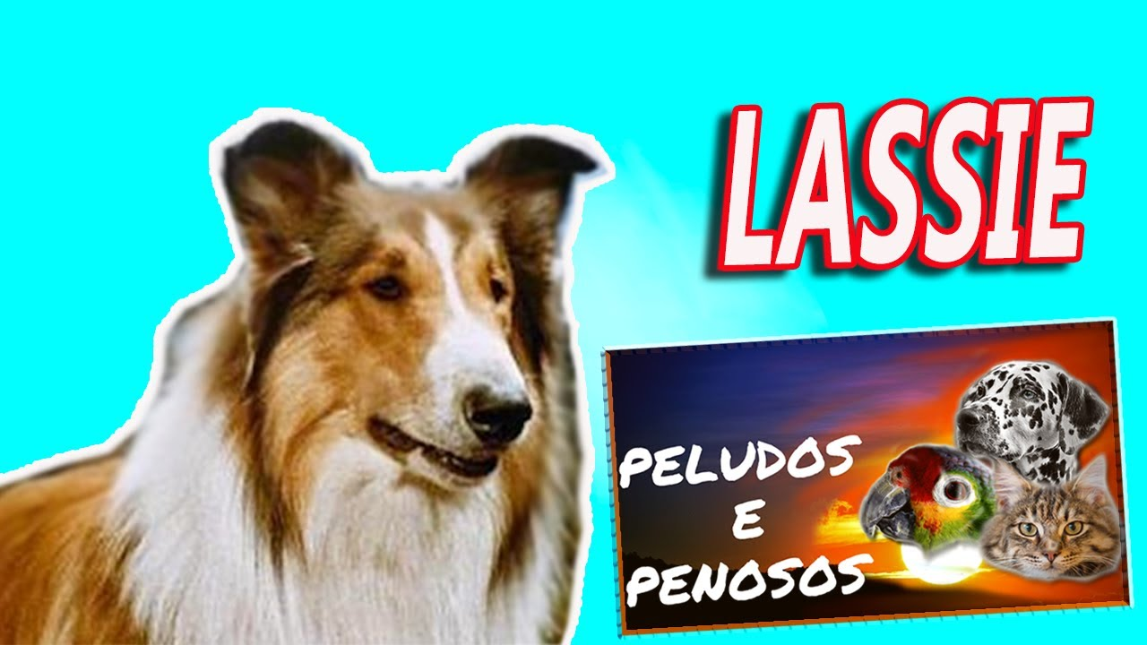 Youtube Lassie