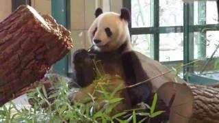 Zoo Wien Schönbrunn-Giant Pandas-Koala Bears-Vienna