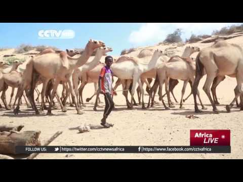 Somali authorities appeal for urgent drought relief