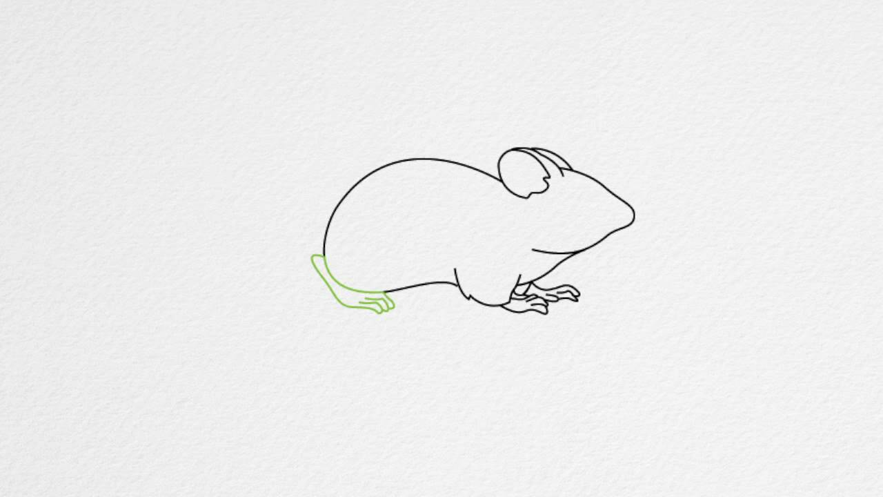 Uncategorized Draw Mouse how to draw a mouse step by youtube