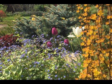 Экскурсия по нашему майскому саду