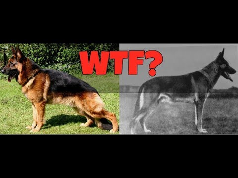 HOW BREEDING CHANGED THESE DOG BREEDS | Wildly Indian