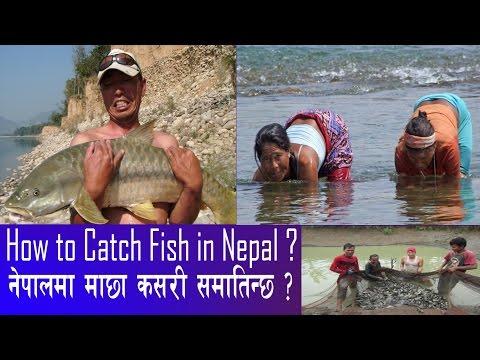 How to Catch Fish in Nepal (Documentary) ll  नेपालमा माछा कसरी मारिन्छ ?  Fishing of Nepal